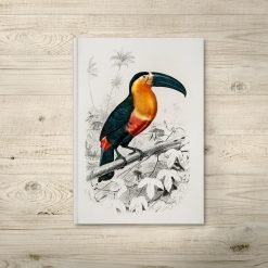 Bird Illustration Notebook Journals