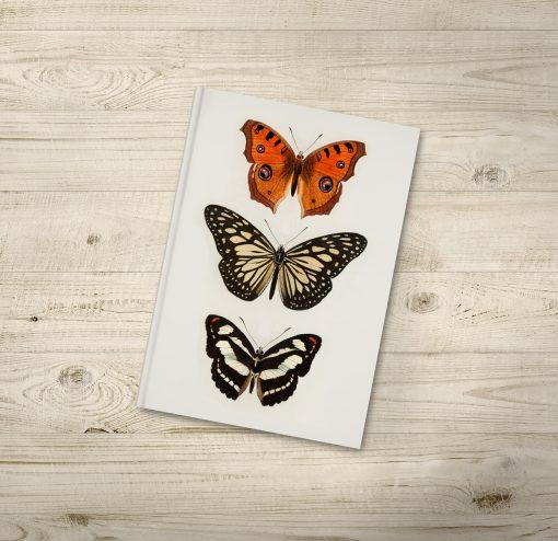 Beautiful Butterfly Illustration Notebooks