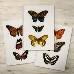 Beautiful Butterfly Illustration Notebooks